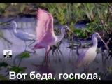 Татьяна Буланова-Купи-продай(караоке)